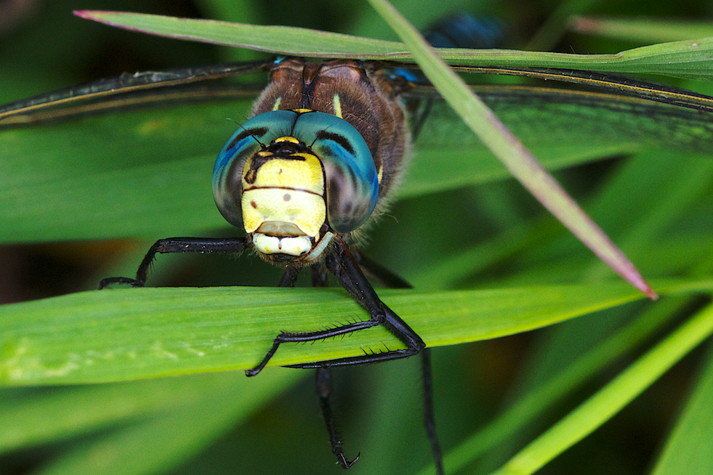 A Very Chillin' Dragonfly