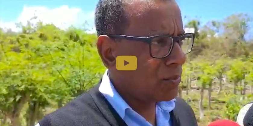 [Vidéo] Quand le 'brède mouroum' s'exporte