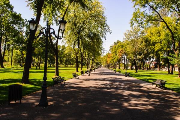 sunny walk in the park