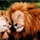 leone e leone