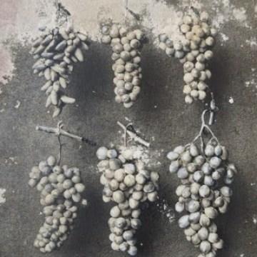 Alberto Pirovano, la viticoltura riedificata