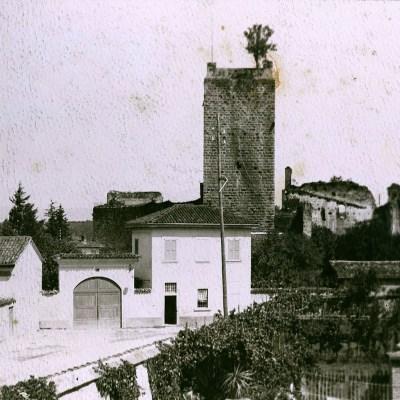 A destra, gli orti della proprietà Rolla; in cima alla torre, una pianta seminata dal vento (Foto Luca Rolla)