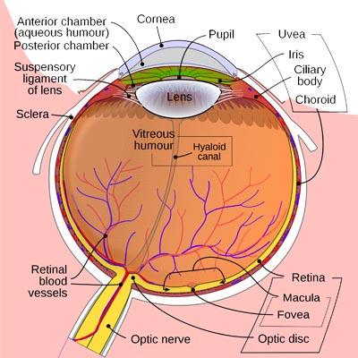 Desprendimiento de retina. Enfermedades y tratamientos para los problemas oculares por el Instituto Oftalmológico Recoletas.