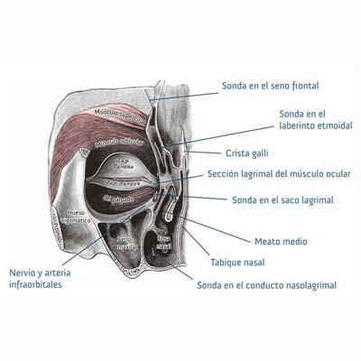 Blefaropasmo. Enfermedades y tratamientos. Instituto Oftalmológico Recoletas