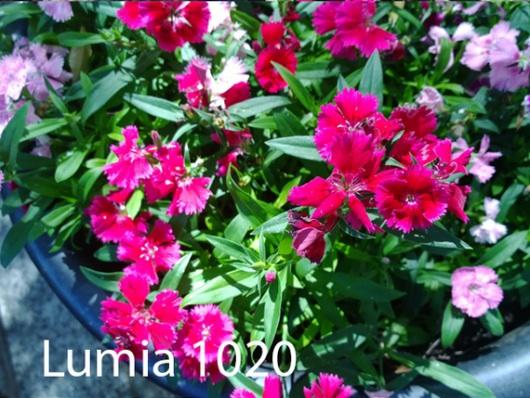Schermata-2013-09-23-alle-23.28.30-530x398