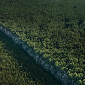 apple-trees-large-610x610