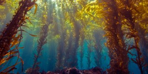 kelp-forest-ecosystems_hero_large_2x-610x304