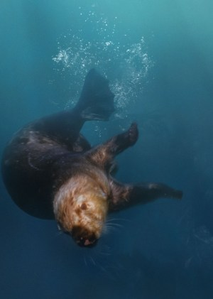 seaotter_large_2x-570x800