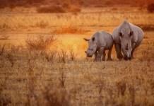 sigfox foundation rhinos