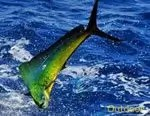 fishing South Florida