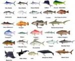 Know your Fishing in Daytona Beach