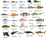 Clearwater Fishing Charters Fish Species