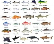 Cape Coral Fishing Charters Fish Species