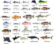 Fishing Chart on Mosquito Lagoon