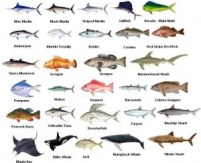 know the Fishing in Clearwater Florida