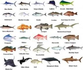 Miami Fishing Species Chart
