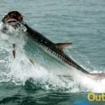 fishing tampa florida Tarpon Fishing in Tampa