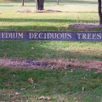 medium-deciduous-trees