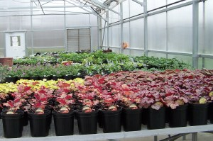 Spring Plant Sale - May 3 & 4 - Saturday and Sunday