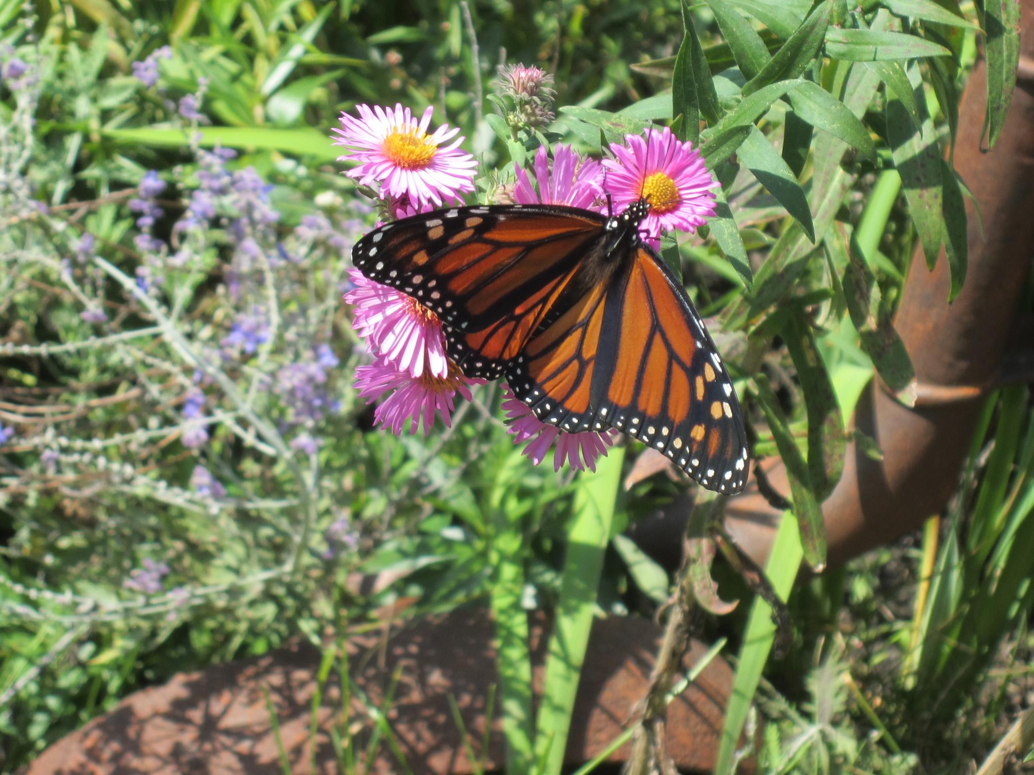 Educational Program-Pollinators