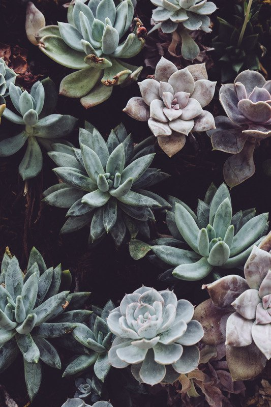 Get to Know Your Succulent Class