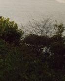 montrose-mississippi-river-bluff