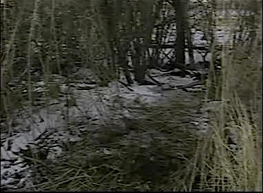 creek-bed-where-phil-terrell-found