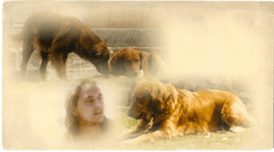 Ron Novak and his three golden retrievers