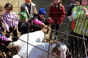 HW goats 2015