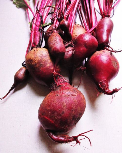 Fresh Beets | Iowa Herbalist