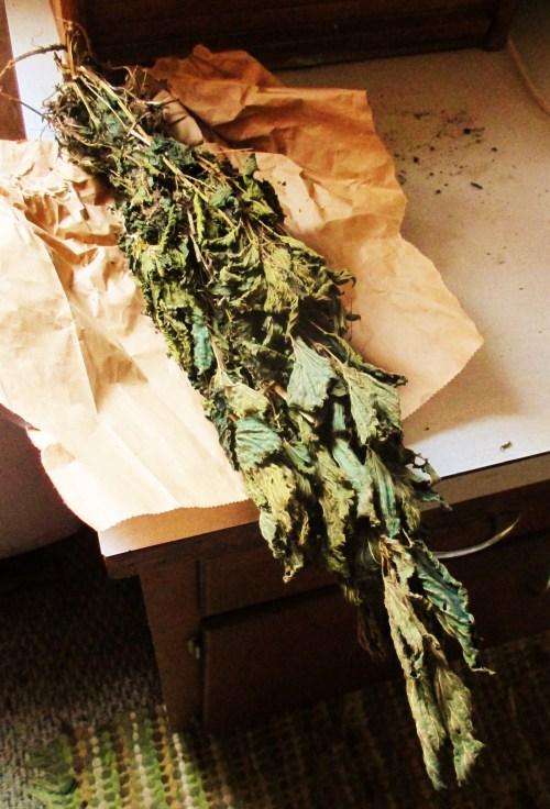 Dried Stinging Nettle   Iowa Herbalist