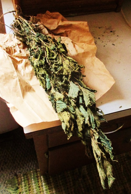 Dried Stinging Nettle | Iowa Herbalist