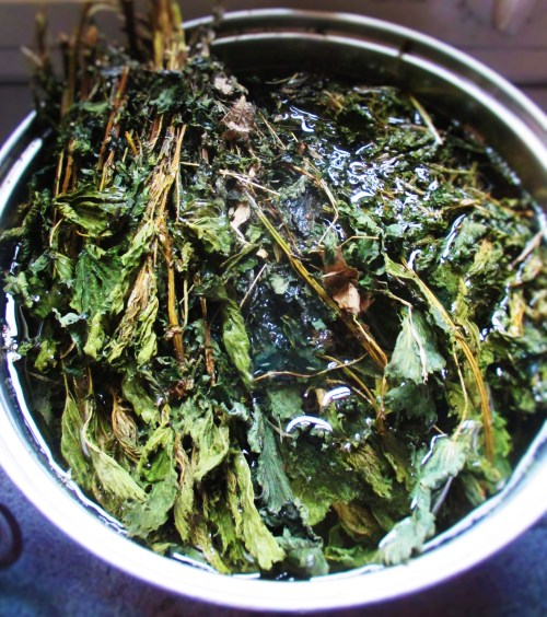Boiling Nettles | Iowa Herbalist
