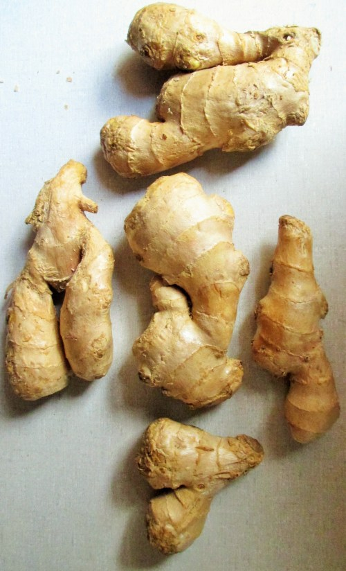 Ginger Rhizomes | Iowa Herbalist