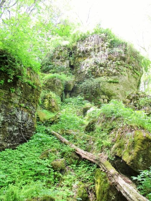 Algific Talus Slope | Iowa Herbalist