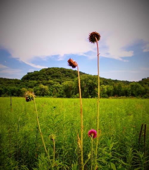 Prairie Driftless Iowa | Iowa Herbalist