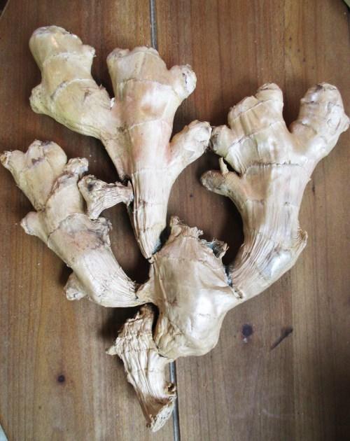 Ginger Root Herbalism | Iowa Herbalist