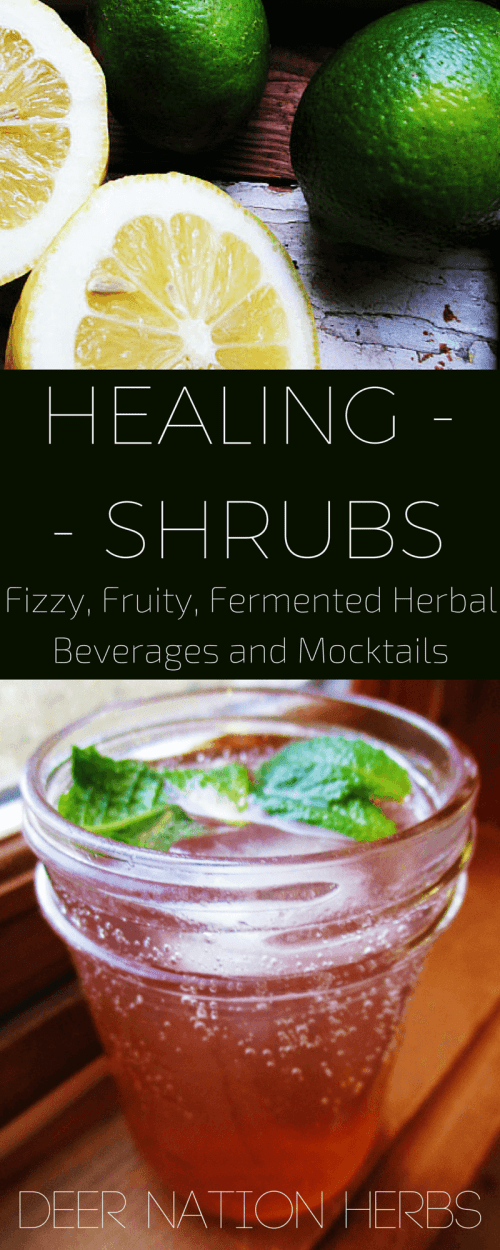 Create, ferment, and brew your own healing shrubs or drinking vinegars with fruits and herbs for a probiotic, healing, herbal mocktail or cocktail.