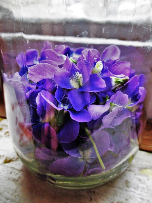 Violet Flowers in Jar | Deer Nation Herbs