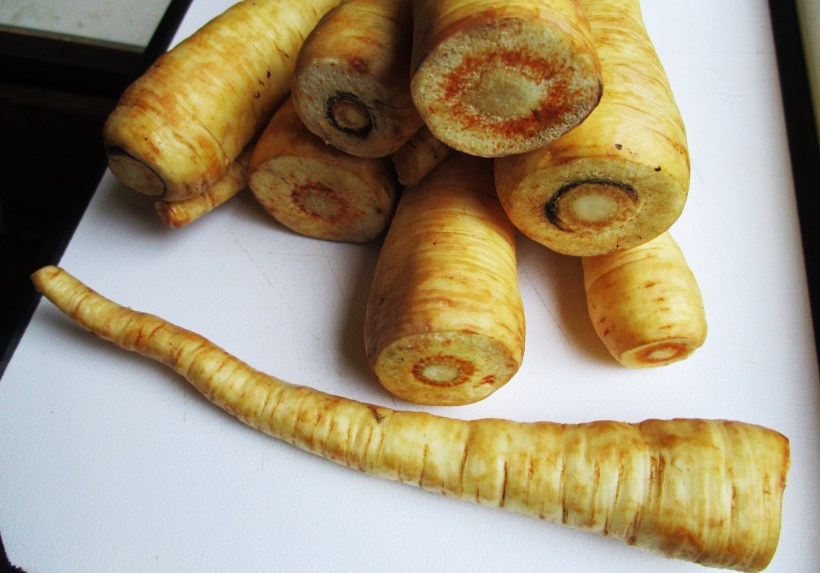 Parsnip Roots | Iowa Herbalist