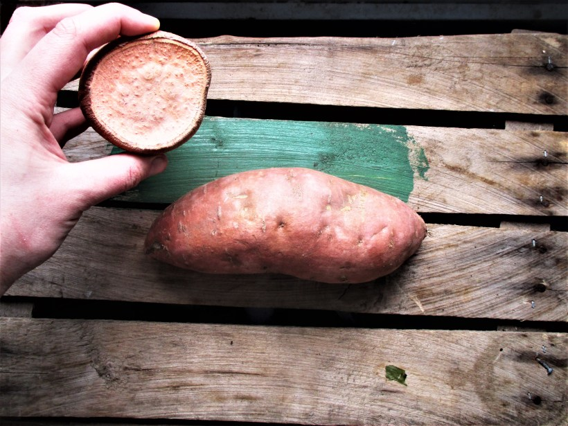 Sweet Potato | Iowa Herbalist