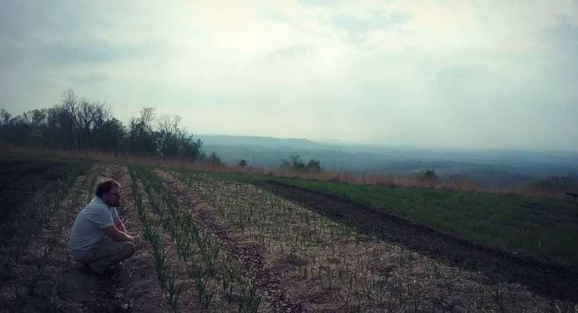 Garlic Field | Iowa Herbalist