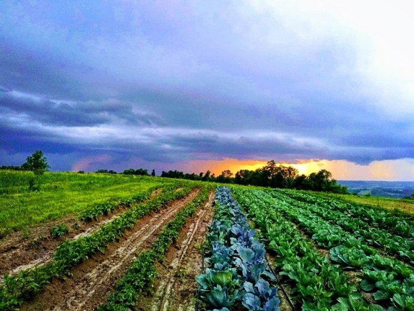 Farm Sunset | Iowa Herbalist