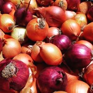 Red and Yellow Onions | Iowa Herbalist