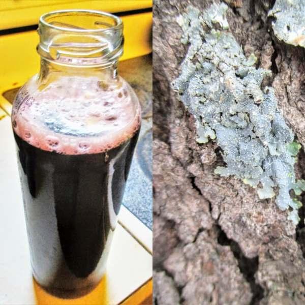 Shop Online Black Cherry Bark Syrup (Iowa Only ) | Iowa Herbalist