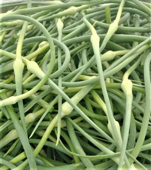 Garlic Scapes | Jupiter Ridge Farm