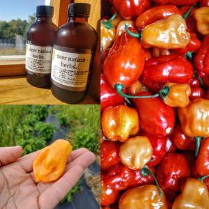 Habanero Syrup | Iowa Herbalist