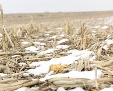 Iowa Farmland Auction Results