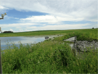 June 2014: Same CREP wetland near Roland, IA