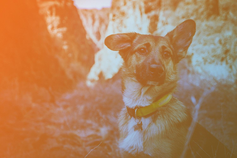 """Zum Artikel """"Sechs smarte Produktideen für Haustierbesitzer"""": Hund mit Halsband, Berge im Hintergrund"""